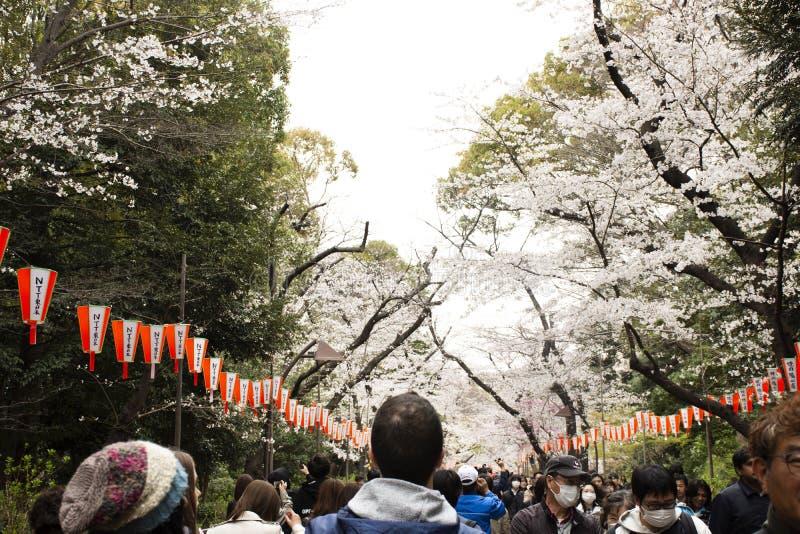Ο ταξιδιωτικός περίπατος των ιαπωνέζων και αλλοδαπών χαλαρώνει και ταξιδεύει την επίσκεψη λουλούδια sakura στο δημόσιο πάρκο Ueno στοκ εικόνες