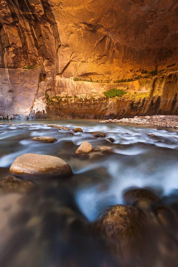 Ο τοίχος ψαμμίτη στενεύει, εθνικό πάρκο Zion, Γιούτα στοκ εικόνα
