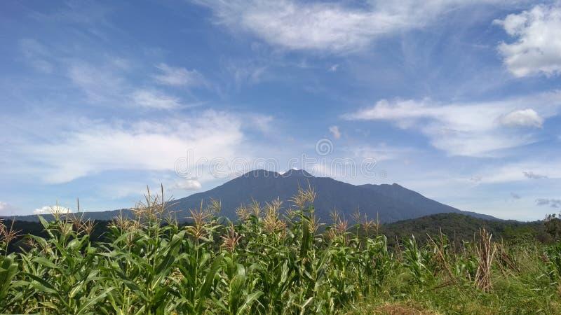 Ο τομέας και το βουνό καλαμποκιού στοκ εικόνες