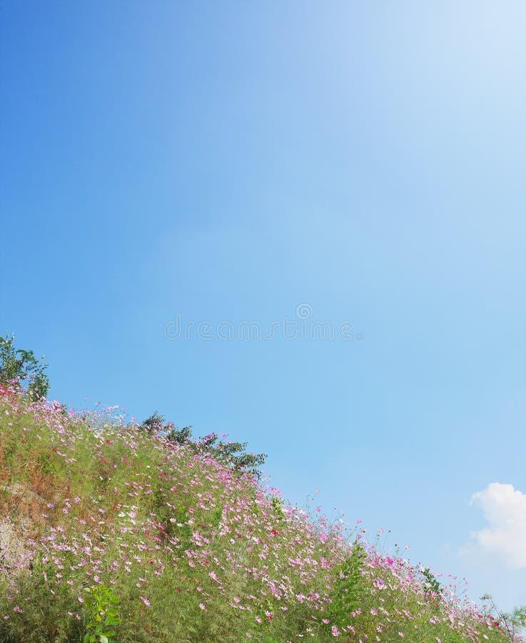 Ο τομέας κόσμου με τα μικρά μικρά ρόδινα λουλούδια στο κατώτατο σημείο άφησε τη γωνία της εικόνας στοκ φωτογραφία