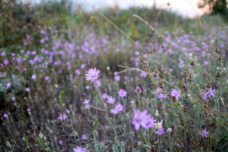 Ο τομέας λουλουδιών στοκ φωτογραφία