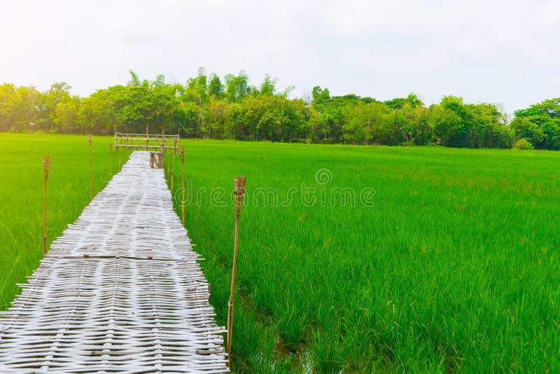 Ο τομέας ρυζιού και η γέφυρα μπαμπού για τον ταξιδιώτη παίρνουν τη φωτογραφία στοκ φωτογραφίες