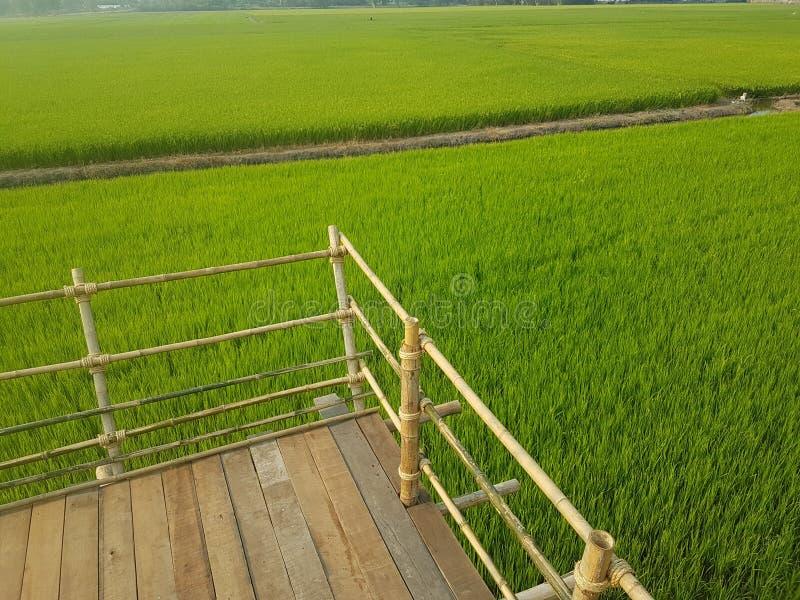 Ο τομέας ρυζιού μου στοκ φωτογραφίες με δικαίωμα ελεύθερης χρήσης