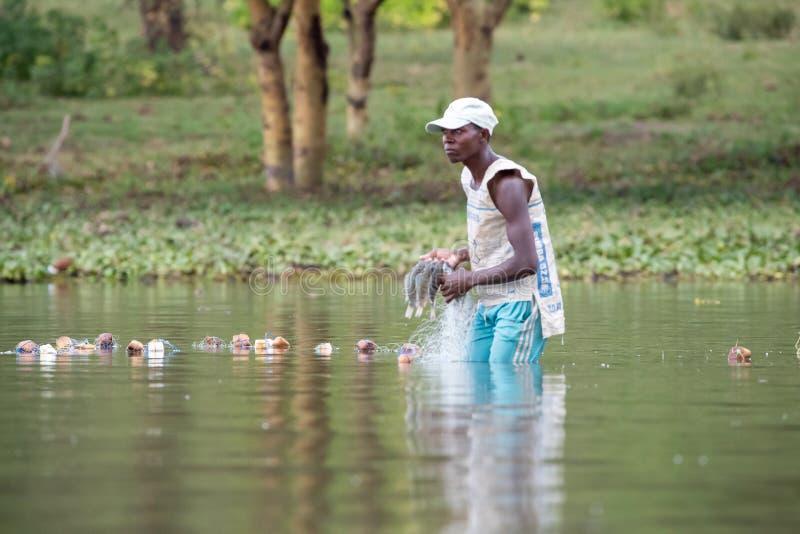 Ο τοπικός ψαράς πετά τα δίχτυα του στα ρηχά νερά της λίμνης Naivasha στοκ εικόνα
