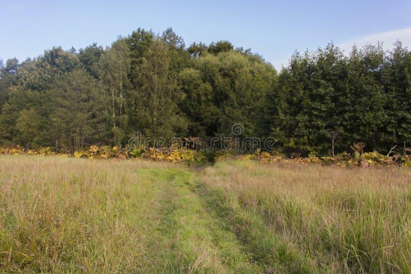 Ο του χωριού δρόμος μέσω του τομέα γυρίζει ομαλά προς το πράσινο δάσος στοκ φωτογραφία