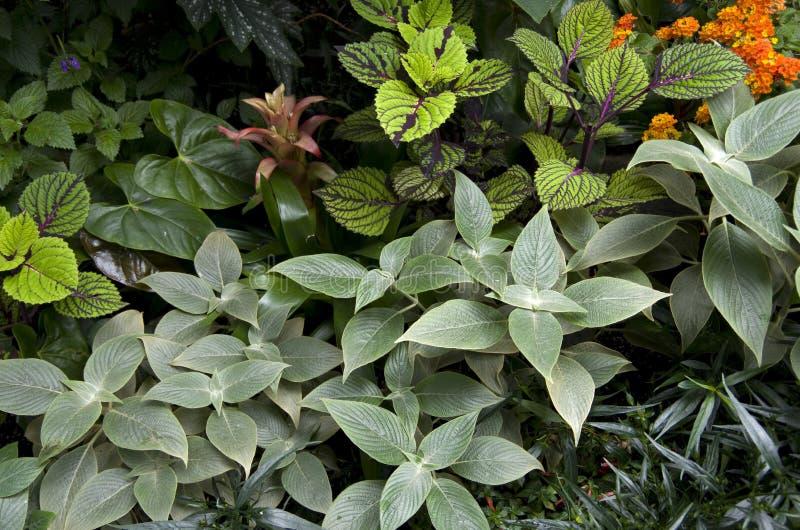 Ο υποτροπικός κήπος ανθίζει τις εγκαταστάσεις στοκ εικόνες