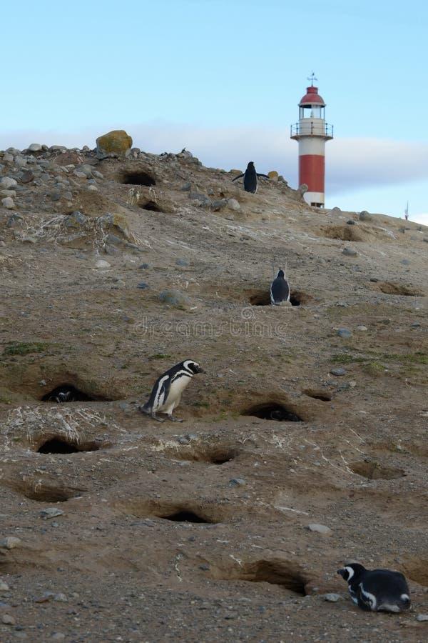 Ο φάρος στο νησί της Magdalena Magellanic Penguins στο άδυτο penguin στη Magdalena Island στο στενό Magel στοκ εικόνες