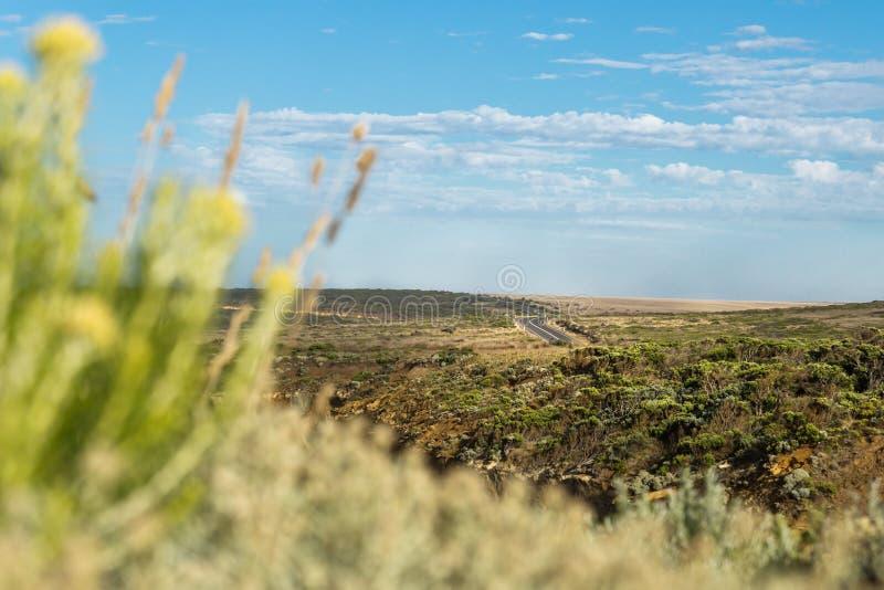 Ο φυσικός και άνεμος μεγάλος ωκεάνιος δρόμος στο τοπίο λιβαδιών, Βικτώρια, Αυστραλία στοκ εικόνες