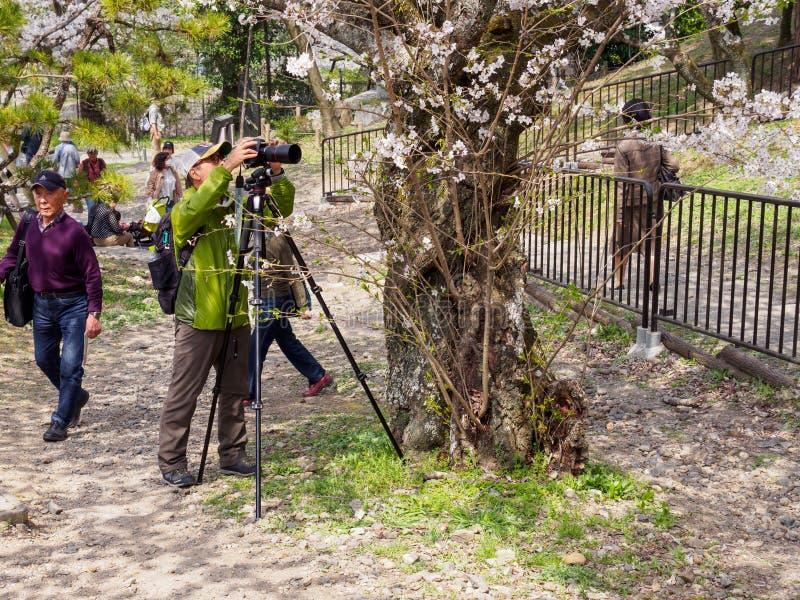 Ο φωτογράφος παίρνει την εικόνα των λουλουδιών Sakura, Κιότο, Ιαπωνία στοκ φωτογραφία με δικαίωμα ελεύθερης χρήσης