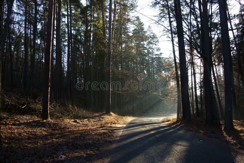 Ο χαμηλός χειμώνας ήλιος παίζει με τις σκιές στο δάσος στοκ εικόνα με δικαίωμα ελεύθερης χρήσης