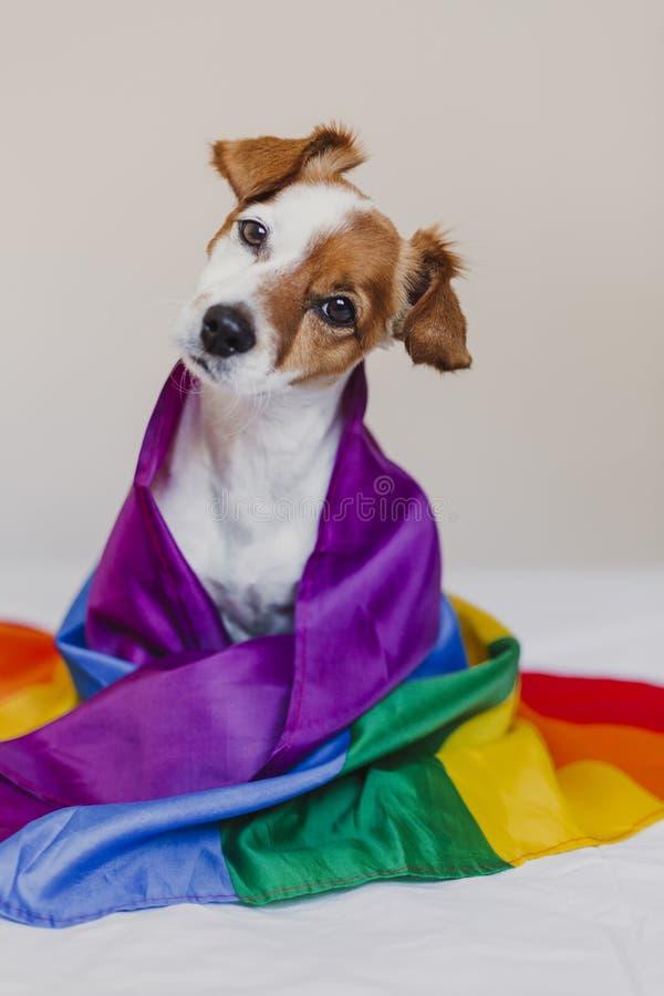Ο χαριτωμένος γρύλος Russell σκυλιών τύλιξε στη σημαία ουράνιων τόξων LGBT στο άσπρο κρεβάτι στην κρεβατοκάμαρα Ο μήνας υπερηφάνε στοκ εικόνα