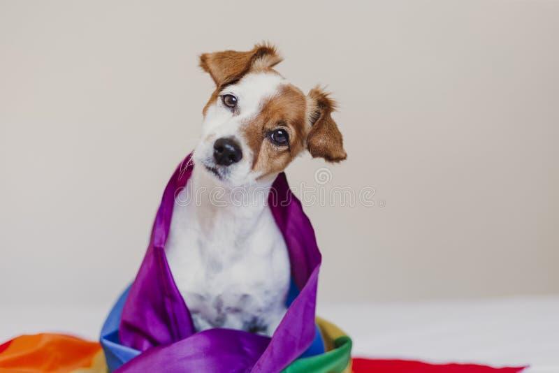 Ο χαριτωμένος γρύλος Russell σκυλιών τύλιξε στη σημαία ουράνιων τόξων LGBT στο άσπρο κρεβάτι στην κρεβατοκάμαρα Ο μήνας υπερηφάνε στοκ φωτογραφίες με δικαίωμα ελεύθερης χρήσης