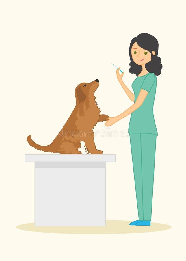 Ο χαριτωμένος κτηνίατρος γυναικών εξετάζει χρυσό retriever φυλής σκυλιών Στο χέρι του κρατά μια σύριγγα απεικόνιση αποθεμάτων