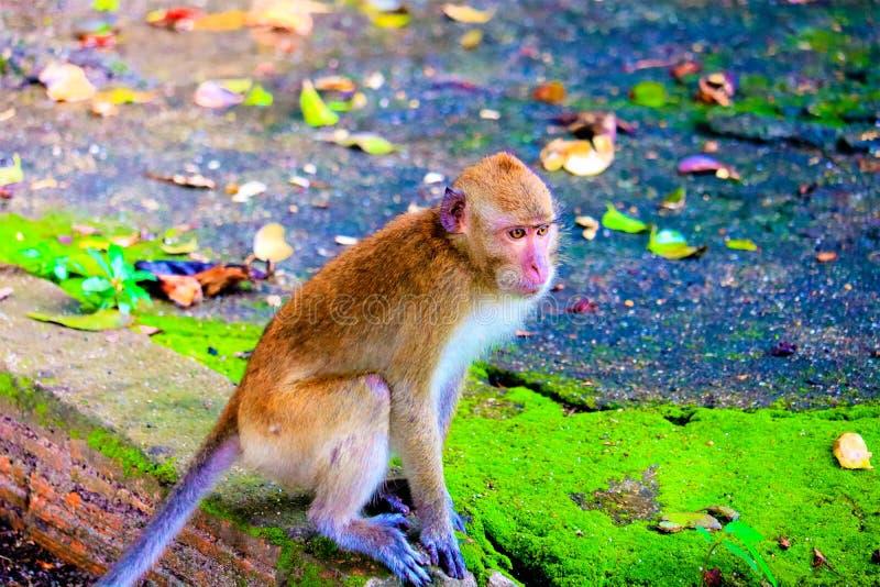 Ο χαριτωμένος πίθηκος μωρών στοκ φωτογραφία με δικαίωμα ελεύθερης χρήσης