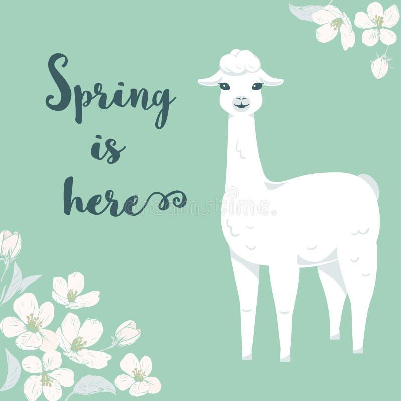 Ο χαριτωμένος llama κινούμενων σχεδίων χαρακτήρας με τα λουλούδια δέντρων κερασιών και την άνοιξη κειμένων είναι εδώ διανυσματική απεικόνιση