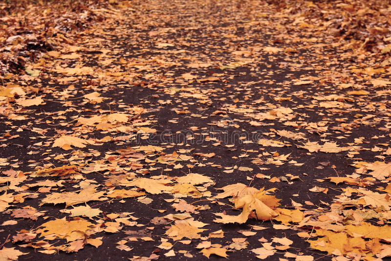 Ο χαλαρός δρόμος φθινοπώρου με τα κίτρινα φύλλα του σφενδάμνου, σημύδα, βαλανιδιά και στοκ φωτογραφίες με δικαίωμα ελεύθερης χρήσης