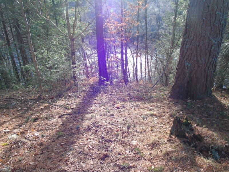 Ο χειμερινός ήλιος λάμπει μέσω των ξύλων επάνω από τη λίμνη Faskally και αποχρωματίζει τα δέντρα στοκ εικόνες με δικαίωμα ελεύθερης χρήσης
