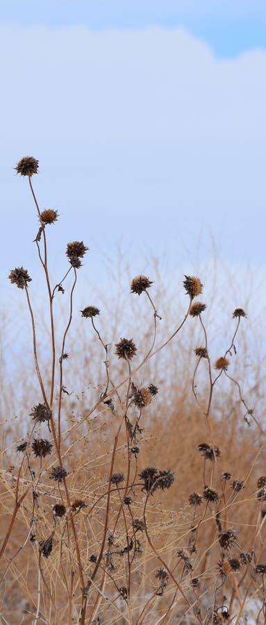 Ο χειμώνας βοτανίζει 8 στοκ φωτογραφίες