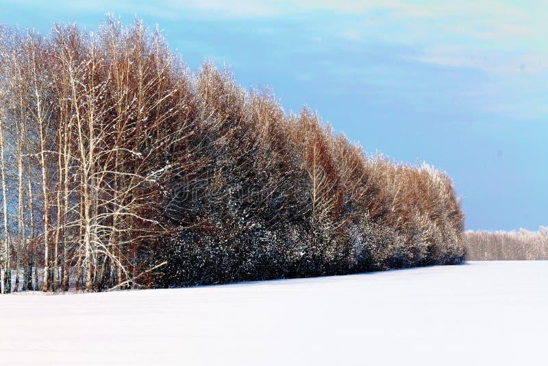 Ο χειμώνας, χιόνι βρίσκεται, χειμερινά δέντρα, στοκ φωτογραφία με δικαίωμα ελεύθερης χρήσης