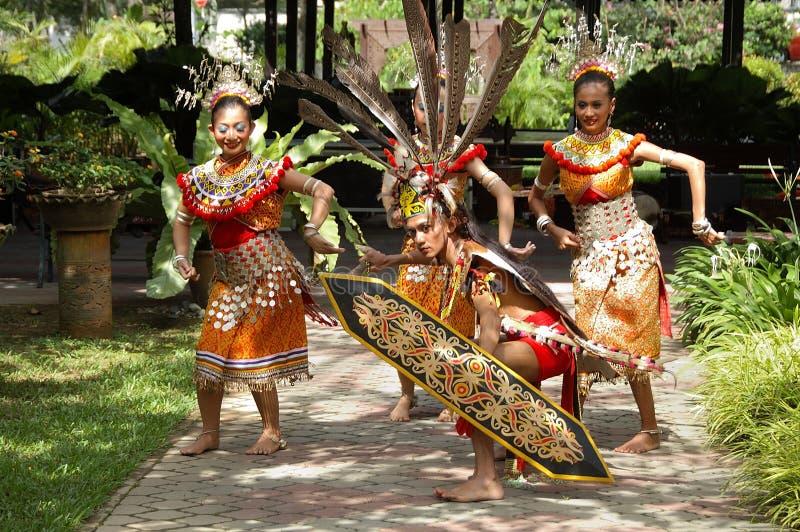 Ο χορός Ulu ουρακοτάγκων στοκ εικόνα με δικαίωμα ελεύθερης χρήσης
