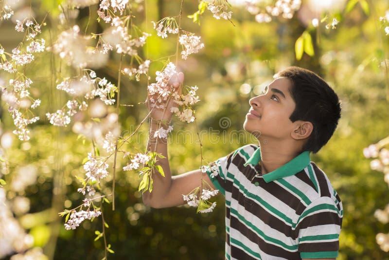 Ο χρόνος άνοιξη… αυξήθηκε φύλλα, φυσική ανασκόπηση στοκ εικόνα
