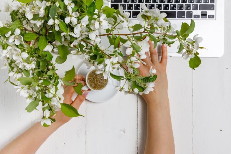 Ο χώρος εργασίας με το χέρι του κοριτσιού στο πληκτρολόγιο και το φλιτζάνι του καφέ lap-top, άσπρα λουλούδια δέντρων μηλιάς άνοιξ στοκ φωτογραφίες