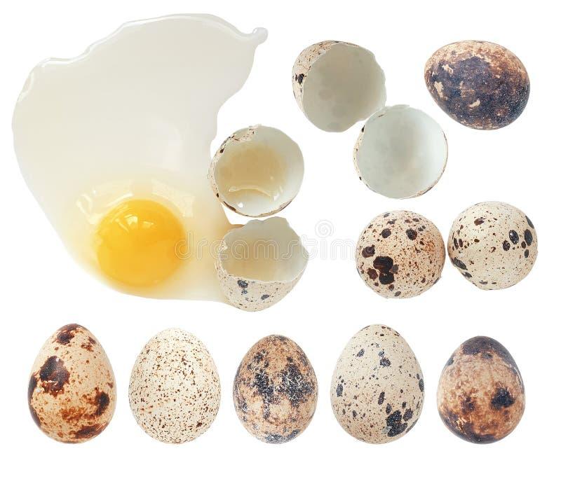 Ολόκληρη και σπασμένη συλλογή αυγών ορτυκιών, που απομονώνεται στο λευκό με το γ στοκ εικόνες με δικαίωμα ελεύθερης χρήσης