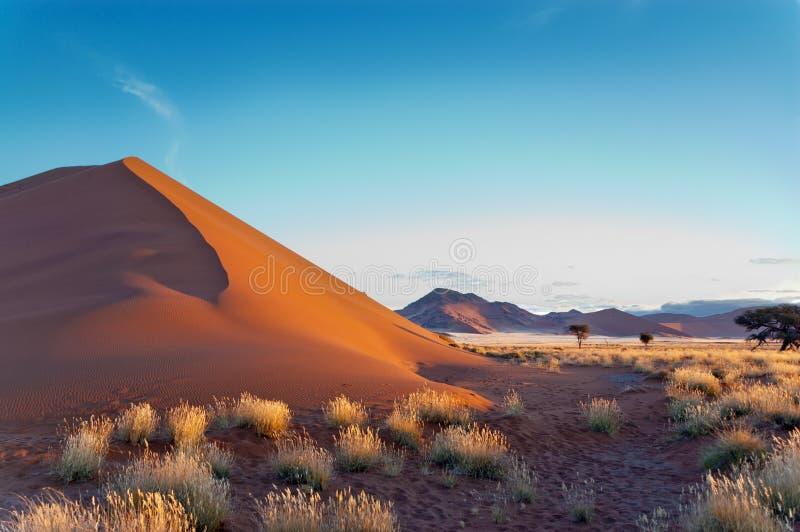 Ο όμορφοι αμμόλοφος ηλιοβασιλέματος και η φύση Namib εγκαταλείπουν στοκ φωτογραφίες με δικαίωμα ελεύθερης χρήσης