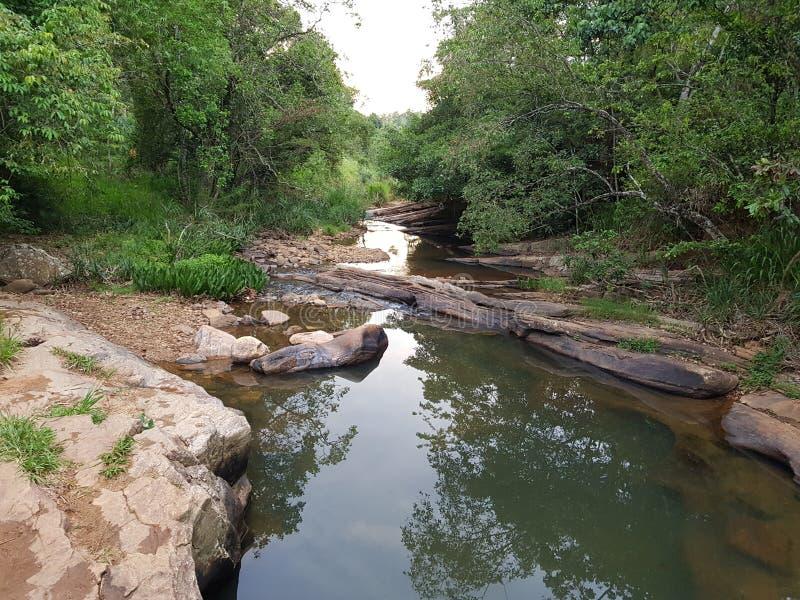 Ο όμορφος ποταμός στη ζούγκλα στοκ φωτογραφίες με δικαίωμα ελεύθερης χρήσης