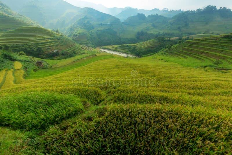 Ο όμορφος πράσινος terraced τομέας ρυζιού στοκ εικόνες