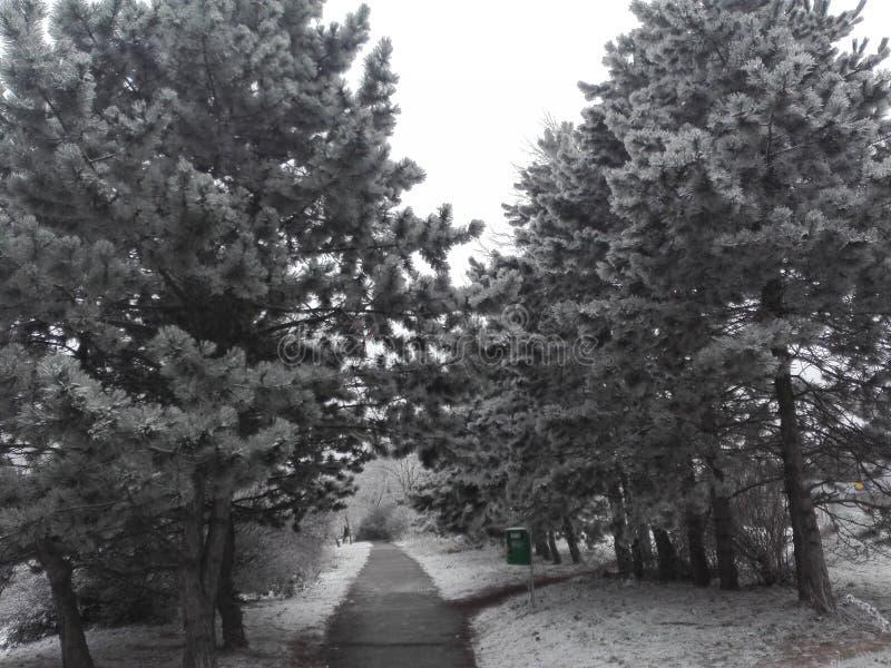 Οδός χιονιού στη Μπρατισλάβα στοκ φωτογραφία
