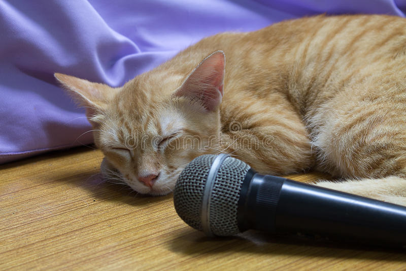 Ο ύπνος γατών στοκ εικόνες με δικαίωμα ελεύθερης χρήσης