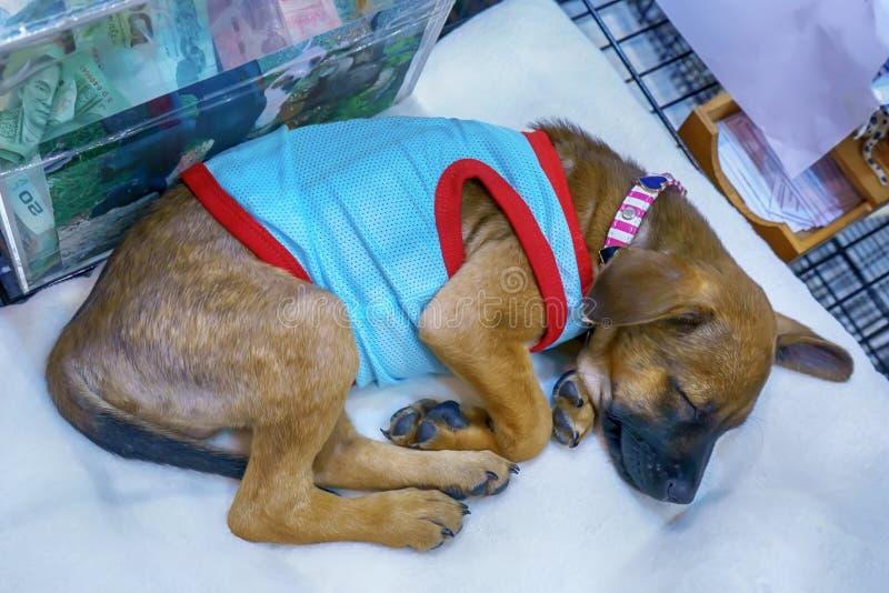 Ο ύπνος σκυλιών στοκ φωτογραφία με δικαίωμα ελεύθερης χρήσης