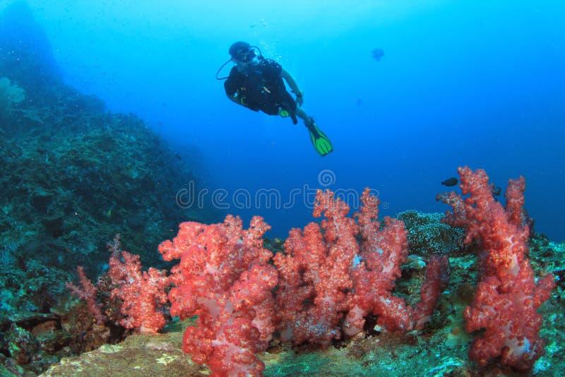 ο δύτης κοραλλιών εξερε& στοκ εικόνα
