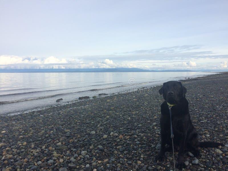 Ο Ben αγαπά την παραλία στοκ φωτογραφία