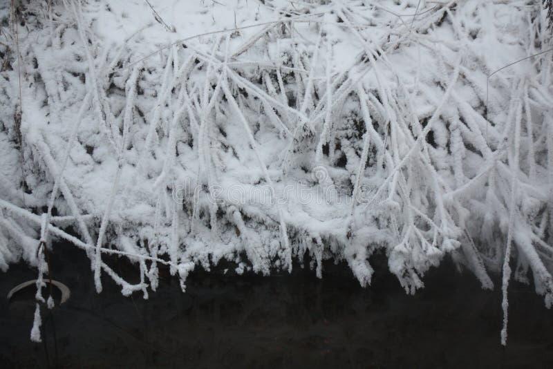Ο hoar παγετός στοκ εικόνα