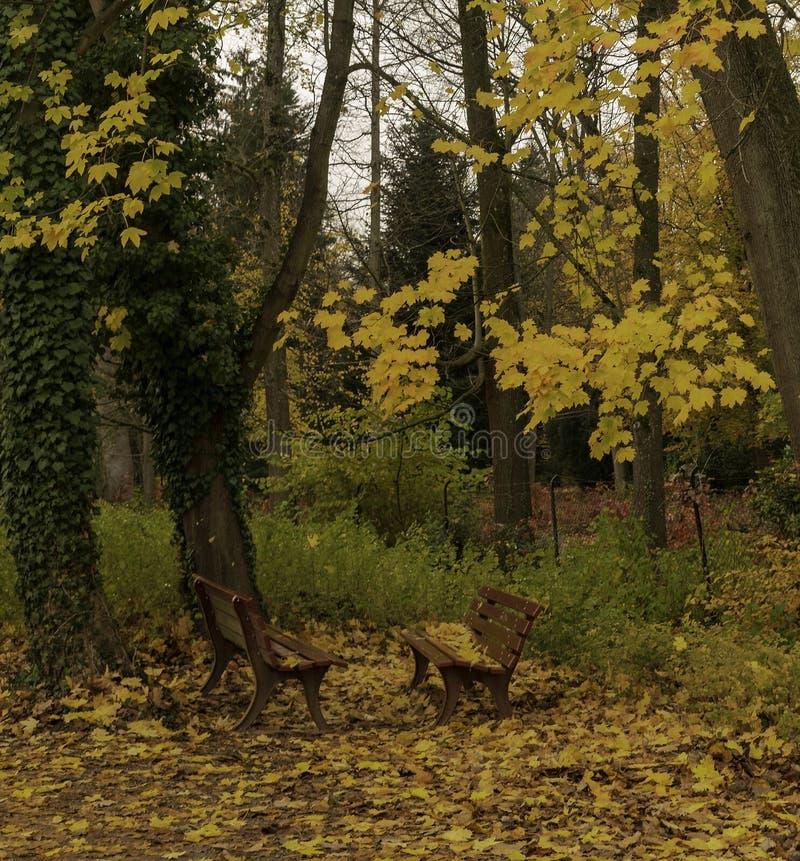 Πάγκοι κήπων σε μια ημέρα φθινοπώρου στοκ εικόνες