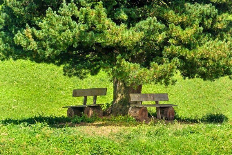 Πάγκος κάτω από τη σκιά δέντρων κάτω από το μεγάλο δέντρο πεύκων στοκ εικόνα με δικαίωμα ελεύθερης χρήσης