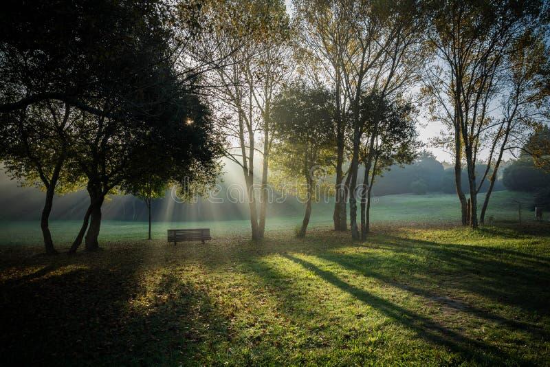 Πάγκος κήπων στη μέση των δέντρων και του όμορφου φωτός που κρυφοκοιτάζουν μέσω των κλάδων Πάρκο πόλεων του Πόρτο στοκ εικόνες