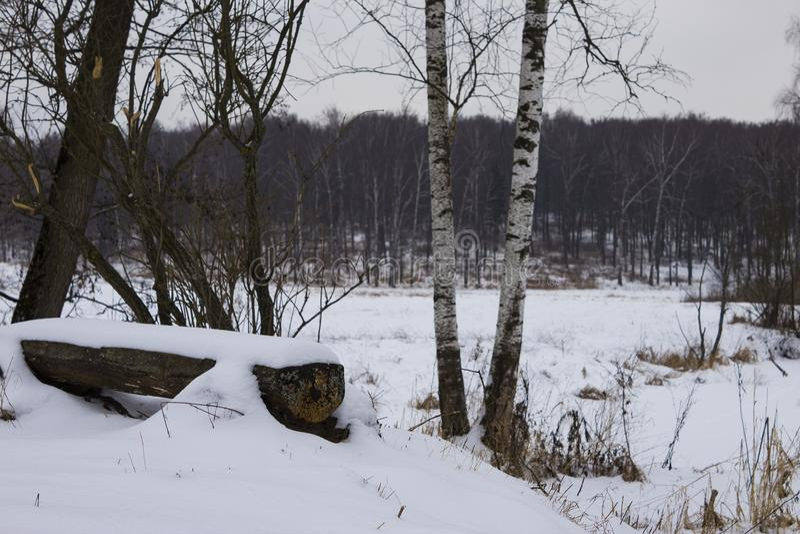 Πάγκος και δέντρα πάρκων που καλύπτονται από τη ισχυρή χιονόπτωση Μέρη του χιονιού στοκ φωτογραφία