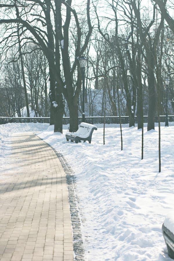 Πάγκος και δέντρα πάρκων που καλύπτονται από τη ισχυρή χιονόπτωση στοκ φωτογραφίες με δικαίωμα ελεύθερης χρήσης