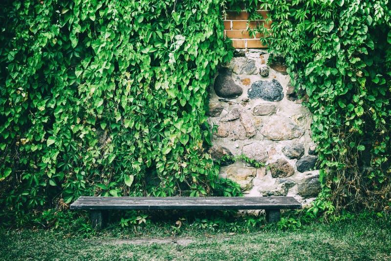 Πάγκος κοντά στον παλαιό τοίχο πετρών που καλύπτεται με τα φύλλα κισσών στοκ φωτογραφία με δικαίωμα ελεύθερης χρήσης