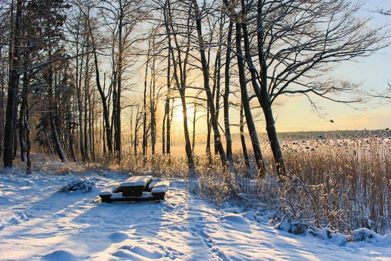 Πάγκος πάρκων που καλύπτεται από τη ισχυρή χιονόπτωση, οι ακτίνες του ήλιου στο χειμερινό δάσος στοκ εικόνες