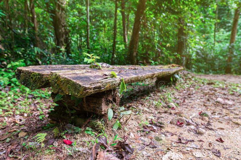 Πάγκος στα ξύλα Μια θέση όπου μπορείτε να στηριχτείτε στον τρόπο στον καταρράκτη Chong FA στην τροπική ζούγκλα Ταϊλάνδη, Ασία στοκ φωτογραφίες