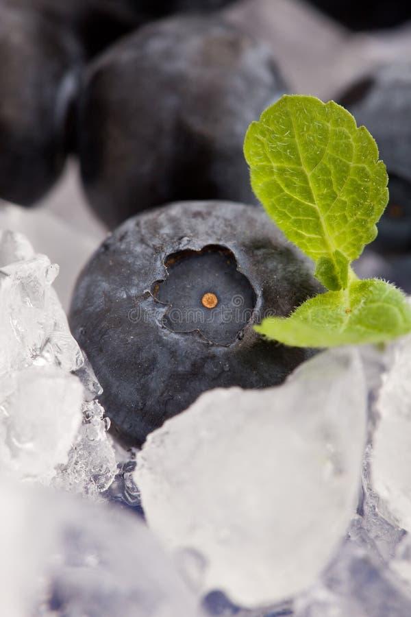 πάγος βακκινίων στοκ φωτογραφίες με δικαίωμα ελεύθερης χρήσης