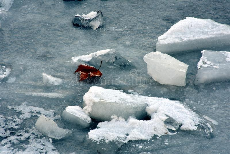 Πάγος και φύλλο στοκ εικόνα