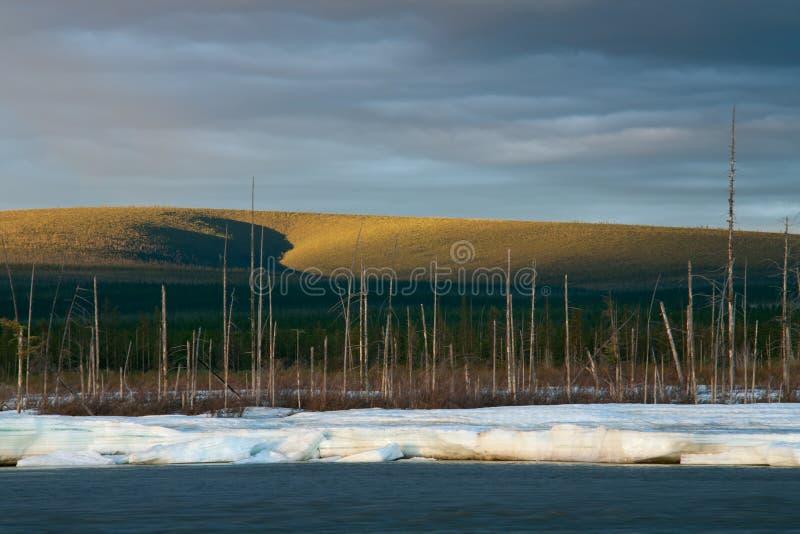 Πάγος στον ποταμό και το νεκρό ξύλο στοκ εικόνες