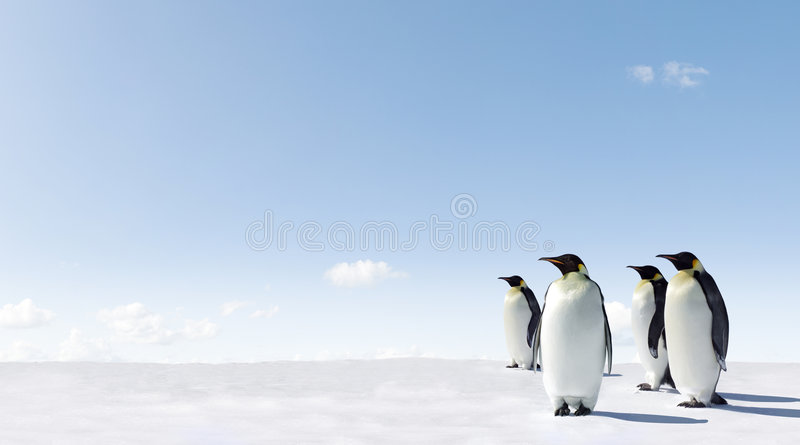 πάγος penguins