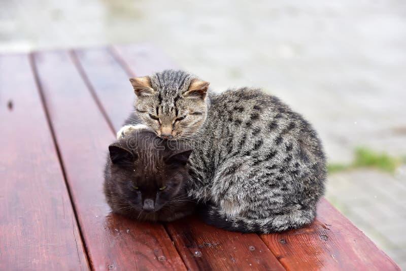Πάγωμα γατακιών στην οδό στοκ εικόνες με δικαίωμα ελεύθερης χρήσης