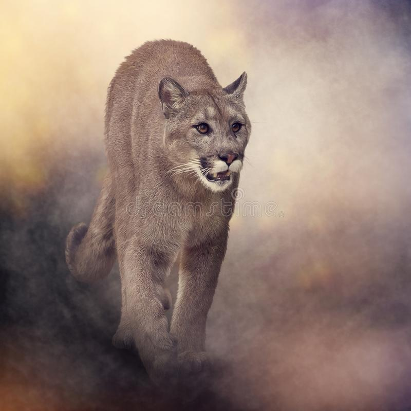 Πάνθηρας της Φλώριδας ή cougar ζωγραφική στοκ εικόνα